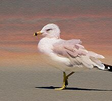 Gull On The Beach by Kathy Baccari
