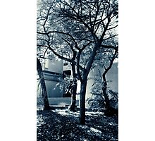 Ethereal Trees Photographic Print