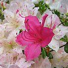 Flower after rain... by Vitaliy Gonikman