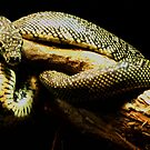 Snake by yas74