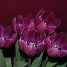 Tulips And Drops by KeepsakesPhotography Michael Rowley
