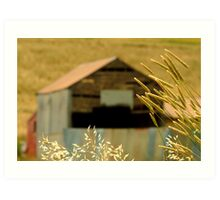 Country Grasses Art Print