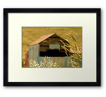 Country Grasses Framed Print