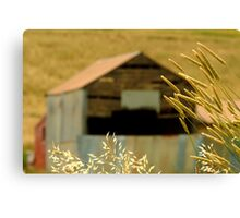 Country Grasses Canvas Print