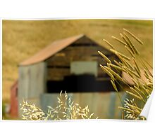 Country Grasses Poster
