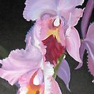 The Queen of Orchids by gunnelau
