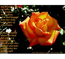 Collaboration..A Friendship Rose Photographic Print