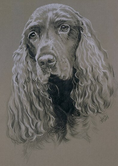 Field Spaniel by BarbBarcikKeith