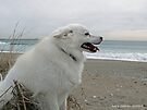 Sylvie the Wonder Dog Pauses at the Beach by Jack McCabe