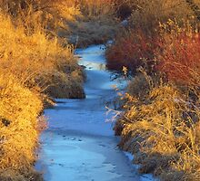 Down By the Creekbank by lorilee