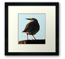 Western Meadowlark - Catchlight Framed Print