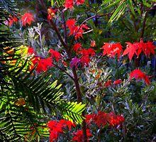 Autumn Dapple by Bryan Cossart