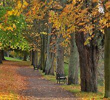 Glorious Autumn by Heather Thorsen