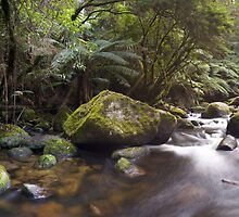 Toorongo River by Mark Jones