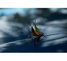 The Hitchhiker Photographic Print