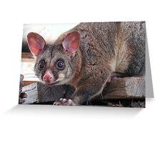 Cheeky Possum Greeting Card