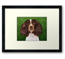 """Major"" Springer Spaniel Framed Print"