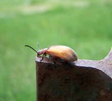 Bug On The Edge by studiok