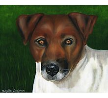 'Otis' - Jack Russell Terrier Photographic Print