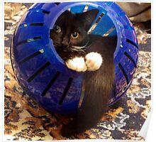 Kitty Ball Poster