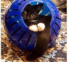 Kitty Ball Photographic Print