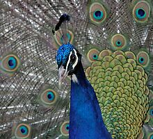 Feathered Elegance by Love Through The Lens