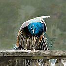 Portmeirion Peacock by Barry Thomas