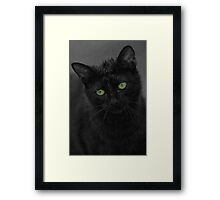 Cats Eyes - Cat Loves Water Framed Print