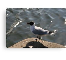 Should I Fly or not Canvas Print