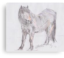 Exmoor Pony Drawing Canvas Print