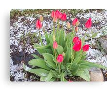 Tulips & Hail Canvas Print