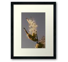 Milkweed Fluff Framed Print