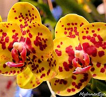 #296          Yellow & Red Spotted Orchid by MyInnereyeMike