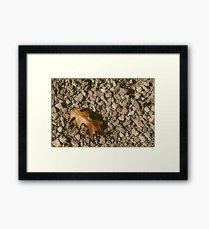 Oak Leaf on Crushed Stone Framed Print