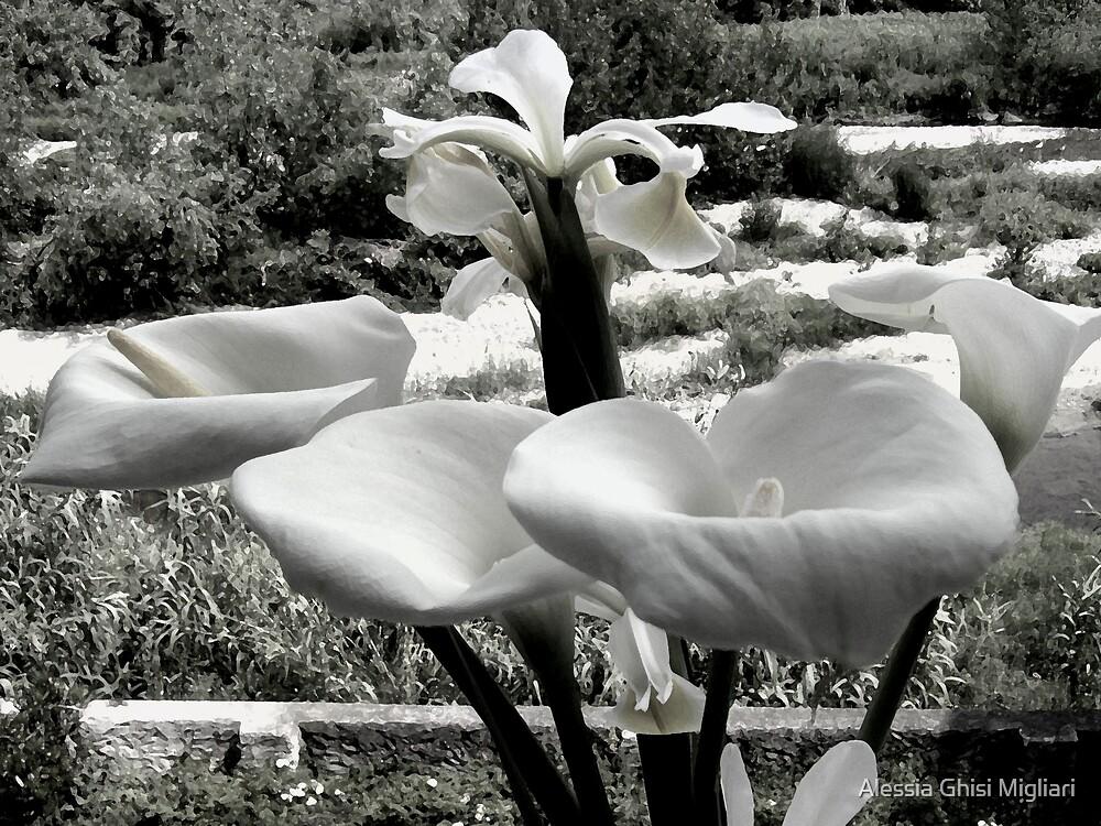 The brides by Alessia Ghisi Migliari