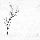 30.12.2014: Naked Birch by Petri Volanen