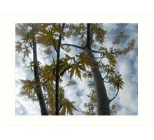 Tree from Below Art Print