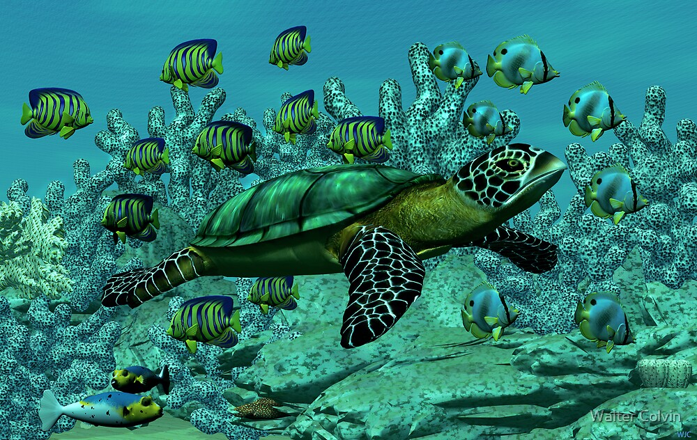 Sea Turtle by Walter Colvin