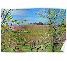 Apple Blossum Time Poster