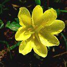 Teeny, Tiny Flower by Rosalie Scanlon