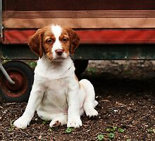 Little Cutie by Helen Green