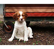Little Cutie Photographic Print