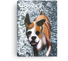 Bertie the Boxer Canvas Print