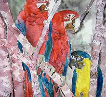 3 parrots wildlife bird tropical painting by derekmccrea