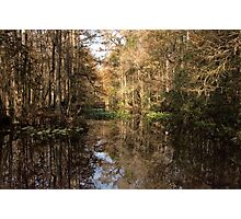 Beauty in the Swamp Photographic Print
