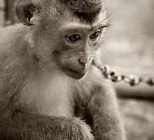 waiting monkey by Martin Pot