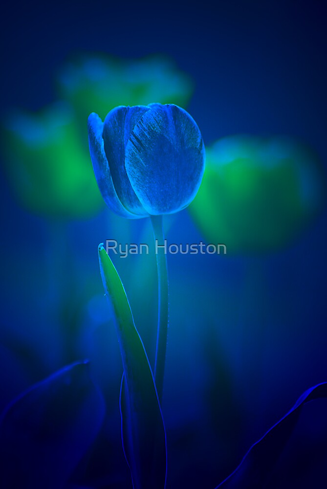 I've Got the Springtime Blues... by Ryan Houston