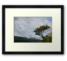 Windswept Rowan Tree Framed Print