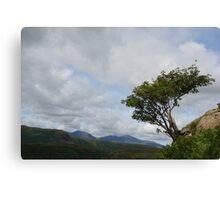 Windswept Rowan Tree Canvas Print
