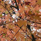 Australian Autumn - 5 by beeden